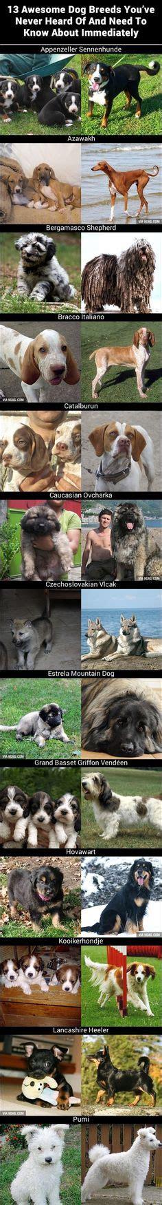 listofdogbreeds helpfully   great infographic