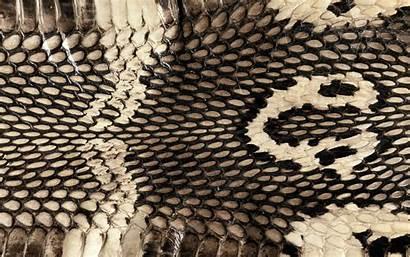 Snake Cobra Skin Reptile Wallpapers Snakeskin Backgrounds