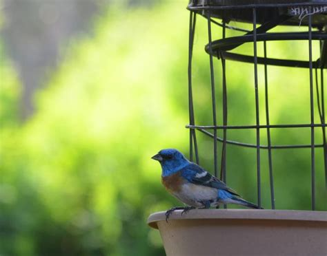 17 best images about birds of god s colors on pinterest