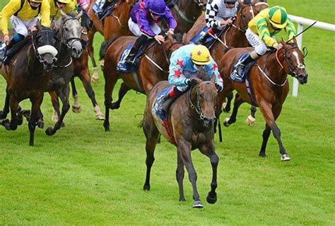 Stunning five-in-a-row success for Laois owned horse and ...