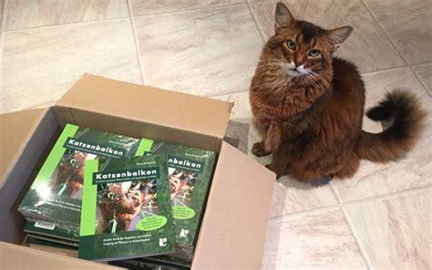 unbedenkliche pflanzen für katzen katzenbalkonbuch geeignete balkonpflanzen finden und vergiftungen vermeiden