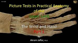 Picture Test In Anatomy Wrist And Hand 1