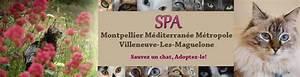 Spa De Montpellier : spa montpellier adoption de chats et de chatons portail ~ Dode.kayakingforconservation.com Idées de Décoration