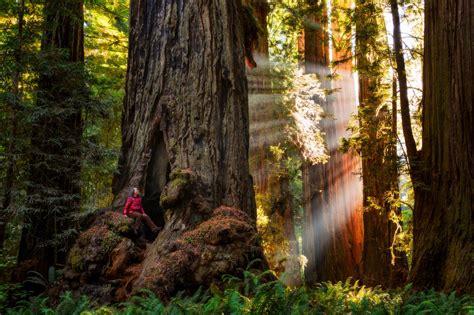 redwood national  state parks