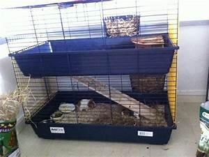 Cage A Cochon D Inde : nouvelle cage pour mes cochons d 39 inde forum cochon d ~ Dallasstarsshop.com Idées de Décoration