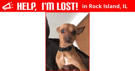 Lost Dog Rock Island Illinois Chico