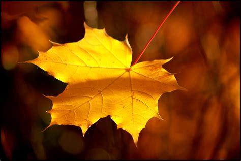 mindfulness exercises  children  celebrate fall