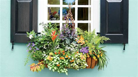 window box ideas  flowers  plant  season