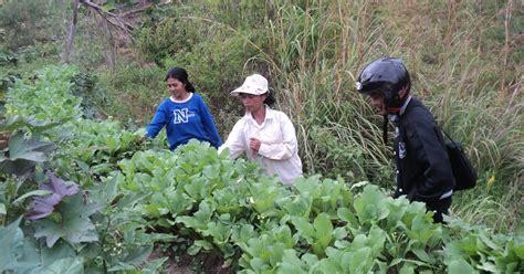 lentera kt petani sayuran dusun rantelemo butuh sentuhan serius dari