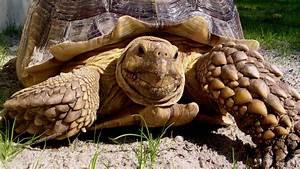 Cute Tortoise Wallpaper | www.pixshark.com - Images ...
