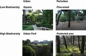 Pictures Of The Four Green Area Typologies Selected As A