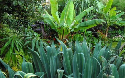 tropical landscape plants tropical garden landscape
