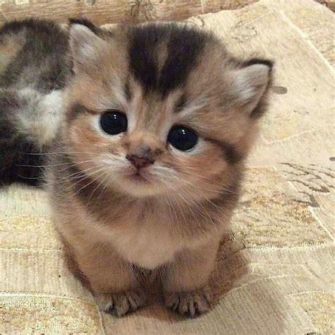 20 chatons trop mignons qui vont vous donner envie de