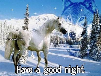 Horses Wolf Horse Night Graphics Snow Wolves