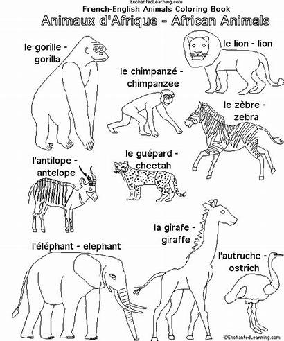 Animals Coloring African Pages Africa French Animal