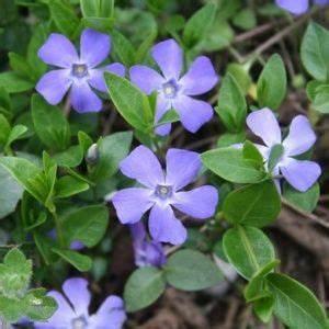 Fleur D Hiver Pour Jardinière : plante vivace ~ Dailycaller-alerts.com Idées de Décoration