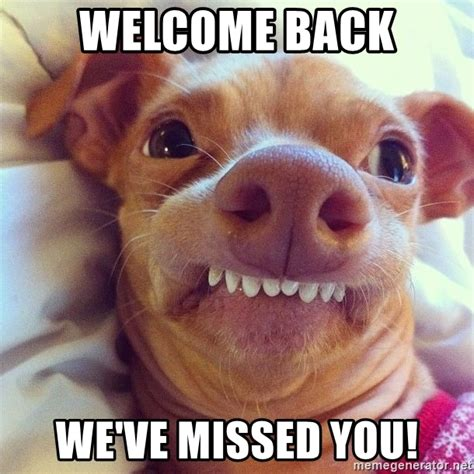 Welcome Back Meme - the gallery for gt we miss you puppy