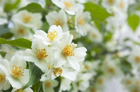 types  flowers   hunker