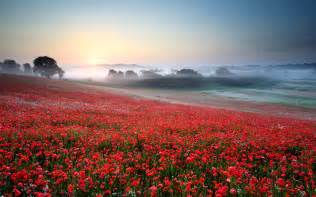 Poppy Flower Fields Wallpaper