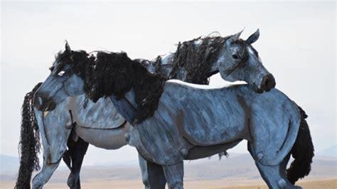 montana horses wild horse