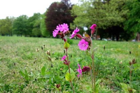 whole year flowering plants urban pollinators what plants are flowering in our perennial meadows