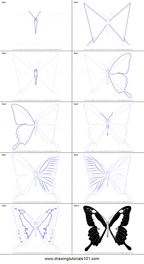 draw  papilio butterfly printable step  step