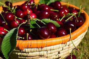 Sweet Cherry Compounds May Protect Against Weight Gain