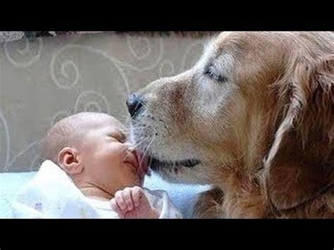 hunde treffen neugeborenen ersten mal hd video youtube