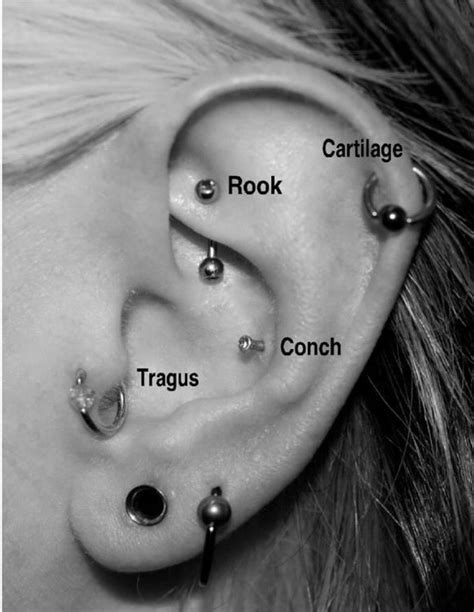pin  matty jantzen   piercings  pinterest rocks