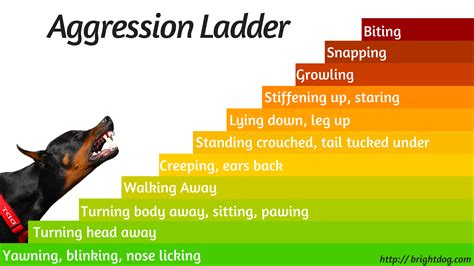 Dog Aggression Ladder  Dog Training Word. Best Video Editing Laptop Cheap Domain Email. Getting Postcards Printed New York Dwi Lawyer. Italian Restaurants Madison Nj. Online Physics Program Lasik Surgery Maryland. How To Snake Proof Your House. Protect Your Bubble Pet Insurance. Dish Restaurant Lincoln Ne Plumbing Web Site. Differences Between Republicans And Democrats