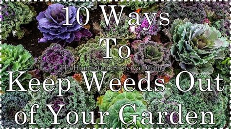 Keep Weeds Out Of Garden by 10 Ways To Keep Weeds Out Of Your Garden The Homestead