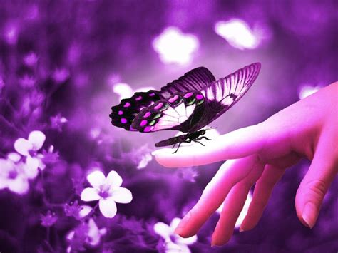 Animated Butterfly Wallpaper - butterfly animated wallpaper