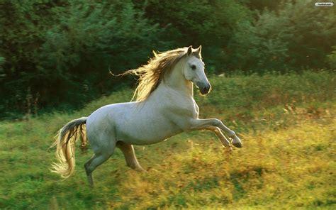 horse wallpapers running jumping hd field animals