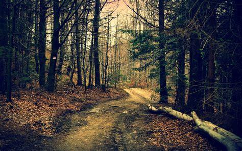 Woods Wallpaper Wallpapersafari