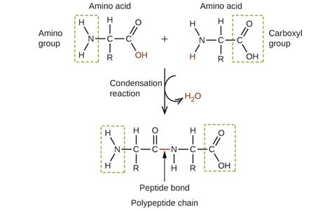 chemistry amines and amides