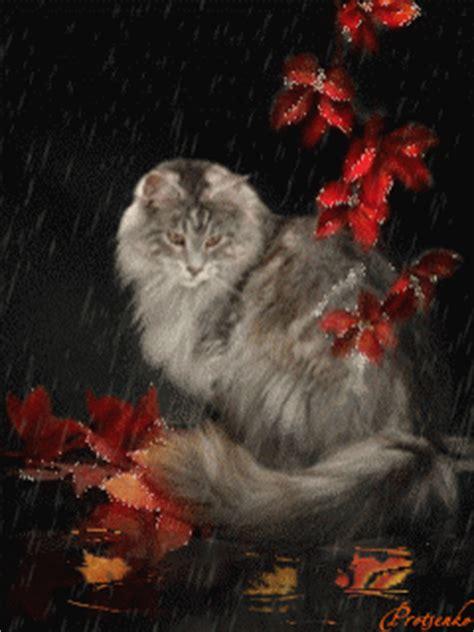cat  autumn rain pictures   images