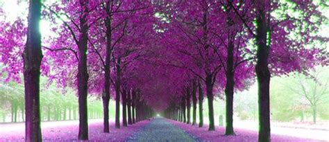 purple landscape wallpaper  wallpapersafari