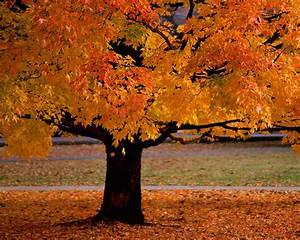 Autumn Trees Desktop Wallpaper | Top Quality Wallpapers