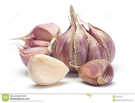 is garlic a vegetable garlic vegetable royalty free stock photo image 16251915