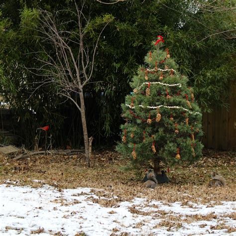 the after christmas tree sturdy for common things