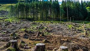 How Does Deforestation Affect The Air