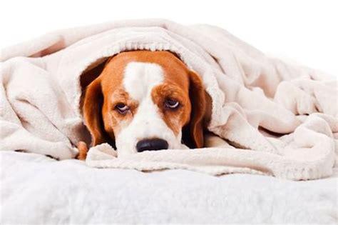 dog poisons     home doglover dog