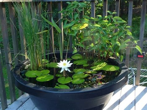 Small Container Water Garden, Small Ponds