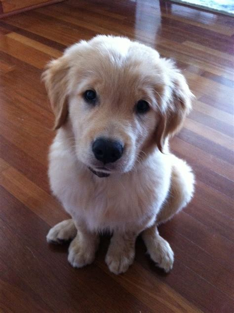 17 Best Images About Puppy Love On Pinterest Puppys