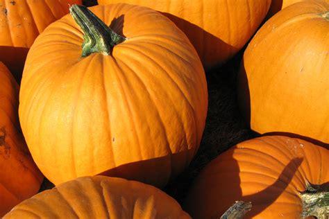 pumpkin re pumpkin patch hay rides petting zoo hay maze in vancouver wa
