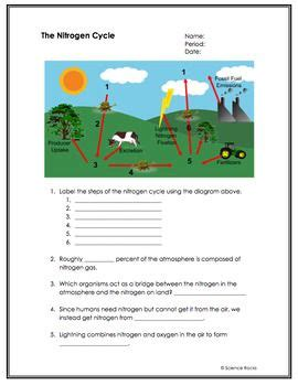 Biogeochemical cycles involve the fluxes of chemical elements among different parts of the earth: Biogeochemical Cycles Worksheet Answer Key - worksheet