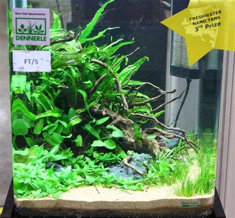 nano aquarium fish freshwater advice layout help betta fish and betta fish care