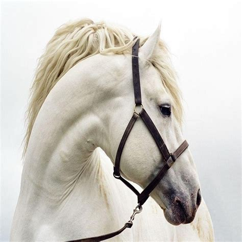 horses horse android