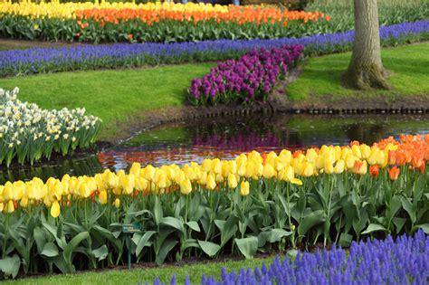 piante ricanti da giardino piante da giardino le variet 224 pi 249 e facili da coltivare