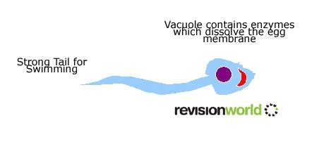 specialised cells biology gcse revision